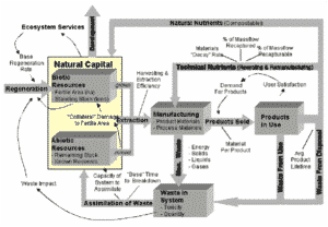 Systems Thinking Primer for Natural Capitalism: The Four Basic Shifts